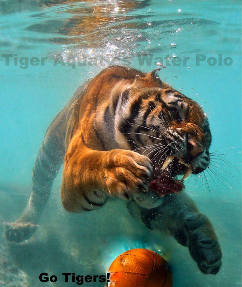 TigerCollage